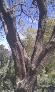 tree egc
